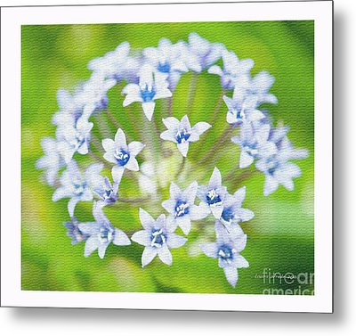 Agapantha Purple Flowers Metal Print by Artist and Photographer Laura Wrede