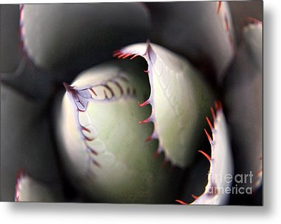 Agave Cactus Metal Print by Ron Chilston