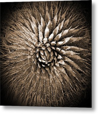 Agave Spikes Sepia Metal Print by Alan Socolik