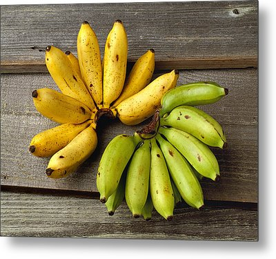Agriculture - Apple Bananas, One Bunch Metal Print by Ed Young