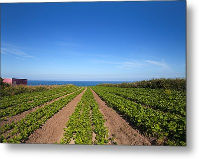 Agriculture, Ardmore Head, Waterford Metal Print by Panoramic Images
