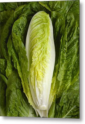 Agriculture - Closeup Of A Romaine Metal Print by Ed Young