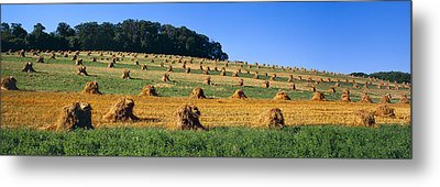 Agriculture - Contour Strips Metal Print by Timothy Hearsum