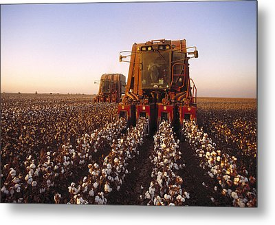 Agriculture - Cotton Harvesting  San Metal Print by Ed Young
