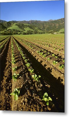 Agriculture - Field Of Early Growth Metal Print by Ed Young