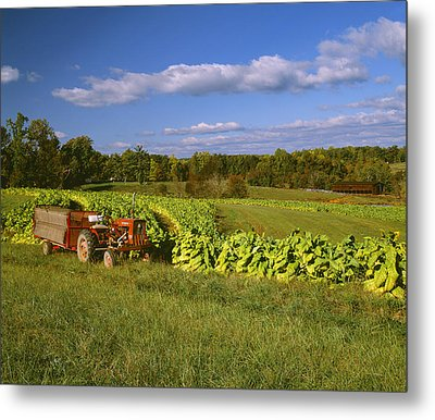 Agriculture - Fields Of Maturing Flue Metal Print by R. Hamilton Smith
