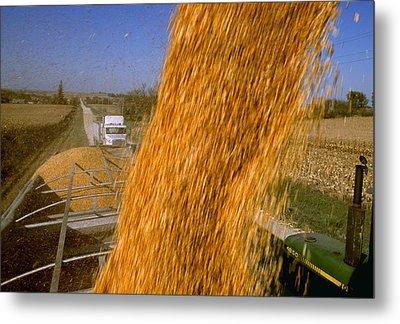 Agriculture - Harvested Grain Corn Metal Print by R. Hamilton Smith