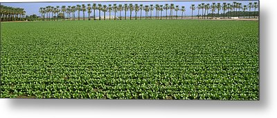 Agriculture - Mid Growth Field Metal Print by Timothy Hearsum