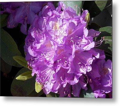 Ah Rhododendron Metal Print