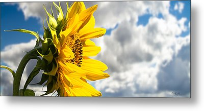 Ah Sunflower Metal Print by Bob Orsillo