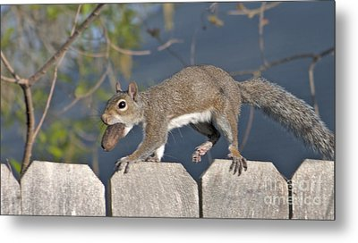 Ahhh Nuts Metal Print by D Wallace