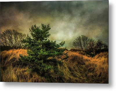 Metal Print featuring the photograph Ainsdale Dunes In Winter by Brian Tarr