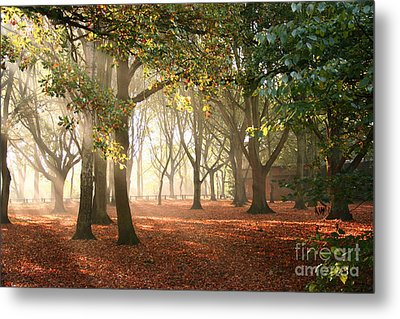 Metal Print featuring the photograph Air Autumn by Boon Mee