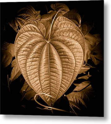 Air Potato Heart In Sepia Metal Print by Christy Usilton