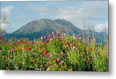 Alaska Flowers In September Metal Print