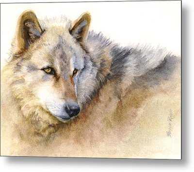 Metal Print featuring the painting Alaskan Gray Wolf by Bonnie Rinier