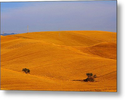 Trees In The Wheat Field Metal Print