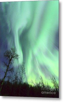 Alberta Aurora Metal Print by Dan Jurak