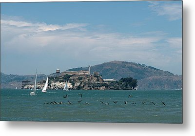 Alcatraz With Pelicans Metal Print