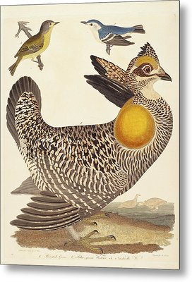 Alexander Lawson After Alexander Wilson, Pinnated Grous Metal Print by Quint Lox