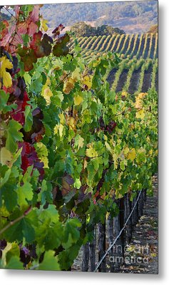 Alexander Valley Vineyard Metal Print