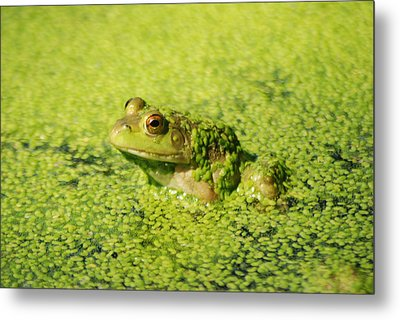 Algae Covered Frog Metal Print by Optical Playground By MP Ray
