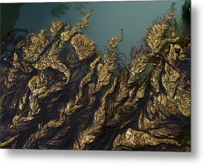 Algae Metal Print by Ron Harpham
