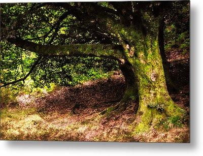 Alive Memory Of Thetrees. Glendalough. Ireland Metal Print by Jenny Rainbow