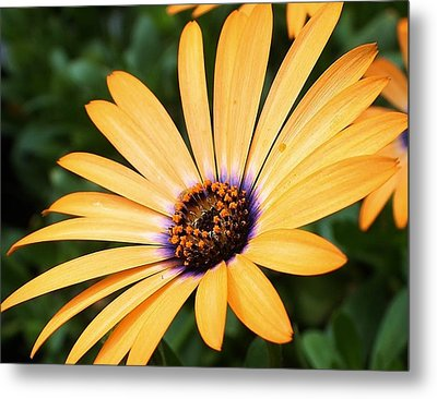 All A Glow Metal Print by Bruce Bley
