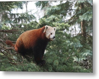 All Alone Metal Print by Judy Whitton