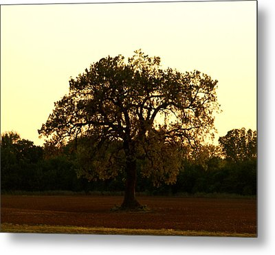 All Alone Metal Print by Roseann Errigo