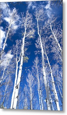 All But Gone Metal Print by The Forests Edge Photography - Diane Sandoval