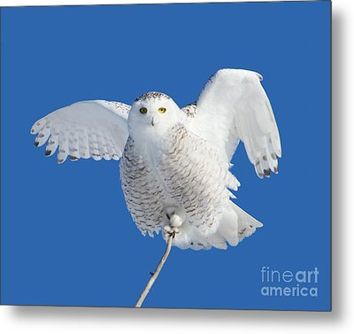 All Hail To The Goddess Metal Print by Heather King