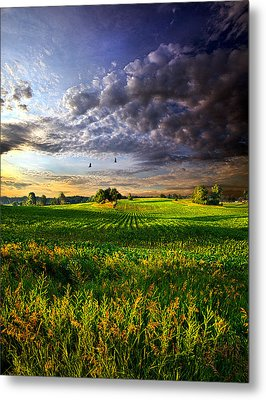 All I Need Metal Print by Phil Koch