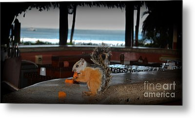 All Inclusive Squirrel Metal Print by Gary Keesler
