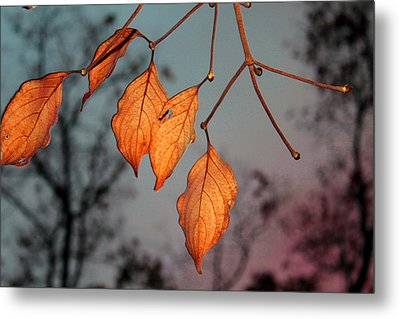 All That's Left Metal Print by Dolores  Deal