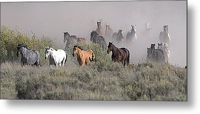 All The Pretty Horses Metal Print