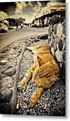 Metal Print featuring the photograph Alley Cat Siesta In Grunge by Meirion Matthias