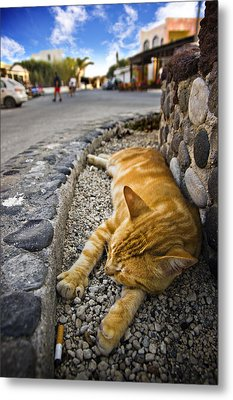 Metal Print featuring the photograph Alley Cat Siesta by Meirion Matthias