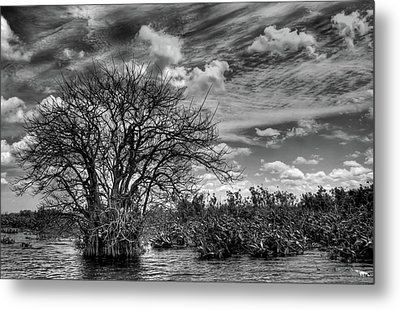 Metal Print featuring the photograph Alligator Country by Geraldine Alexander