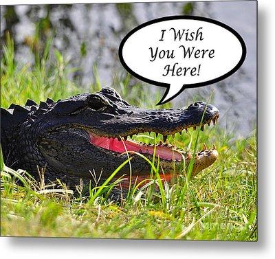 Alligator Greeting Card Metal Print by Al Powell Photography USA