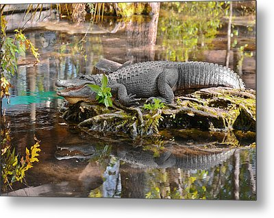 Alligator Mississippiensis Metal Print by Christine Till