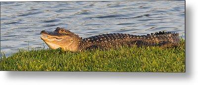 Alligator Smile Metal Print