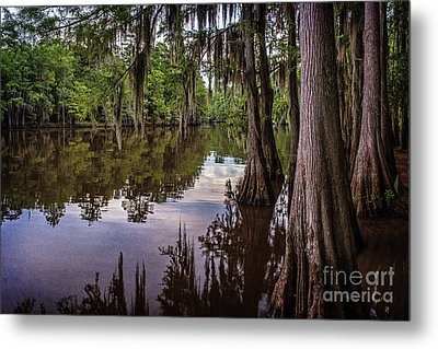 Alligator Swamp On Caddo Lake Metal Print