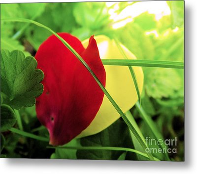 Allowing Love Into Your Heart Metal Print by Robyn King