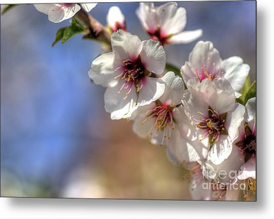 Metal Print featuring the photograph Almond Blossoms by Jim and Emily Bush