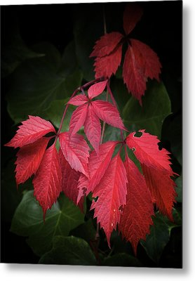 Almost September Metal Print by Colleen Williams
