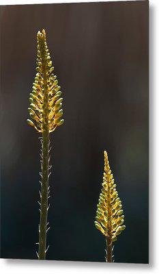 Aloe Plant Metal Print by Tam Ryan