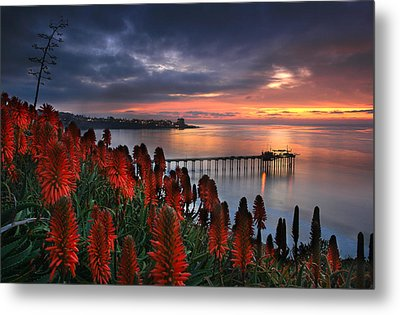 Aloes Last Light Metal Print