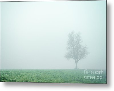 Alone In The Fog - Green Metal Print by Hannes Cmarits
